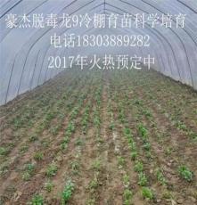 开封豪杰红薯苗大型培育基地
