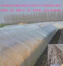 红薯苗培育基地