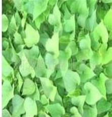 邢臺紅薯苗 高產紅薯苗 紅薯苗批發 龍薯9號