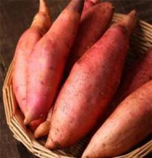 山东红薯_烟薯_烤地瓜专用烟薯25,红薯 批发零售生地瓜