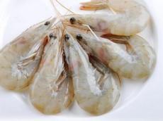 厄瓜多尔白虾进口清关公司青岛报关行