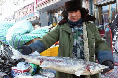 鲜鲟鳇鱼多少钱一斤养殖鲟鳇鱼的零售价