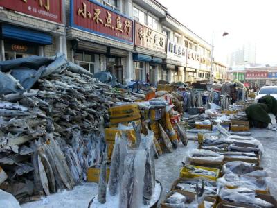 哈尔滨鲟鳇鱼批发 沈阳鲟鳇鱼哪里买