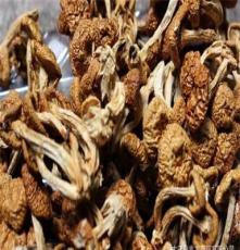 专业生产 特级茶树菇 古田食用菌 价格实惠