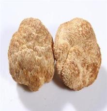 """野山食用菌系列-野山猴头菇 有""""素中荤""""之称"""