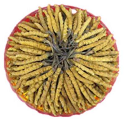 清遠大量回收冬蟲夏草蟲草回收多少錢一克