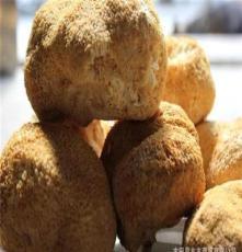 厂家直销 猴头菇 精选猴头 品质优 高质量