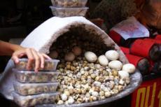 武汉哪里教学盐焗鹌鹑蛋配方