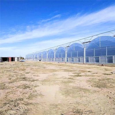 连栋薄膜温室大棚 蔬菜种植薄膜温室造价