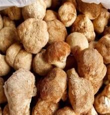 食用菌 猴头菇 猴头菇批发 野生猴头菇 量大从优