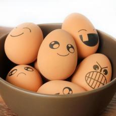 河北畜牧網11月20日河北雞蛋價格行
