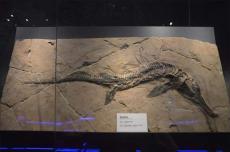 2019年魚龍化石收購哪里好