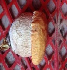 食用野生菌批发 礼盒新鲜野山菌 产地特价野生菌