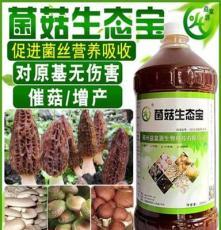猪肚菇的高产栽培管理技术