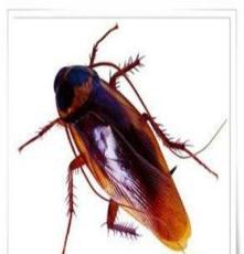 宿州滅鼠滅蟑螂家庭免費滅鼠 專業除四害公司
