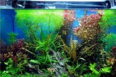 廣州魚缸水草造景公司,水草怎么造景設計好看