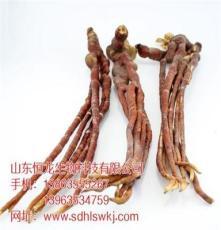 湖南省益阳市野生赤灵芝最新市场行情 恒龙生物科技