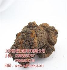山东省烟台市灵芝菌种的培育方法