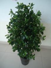 北京人造樹定做北京仿真松樹出售廠