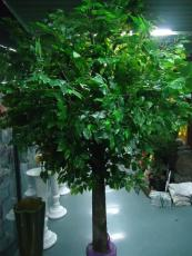 假樹出售北京造景樹定做出售