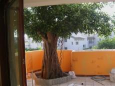 供應假樹出售北京賣大型仿真樹廠