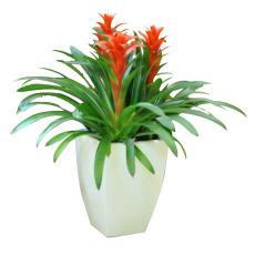 室内观叶植物租赁室内绿植养护