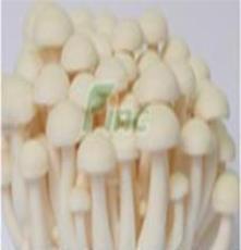供应白玉菇
