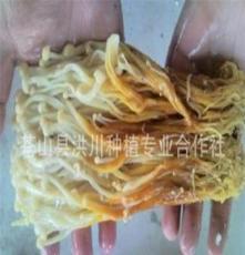代加工腌渍金针菇(价格面议)