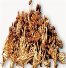 特级茶树菇干货 13年新货 口感脆嫩 未开伞 出口级 150克