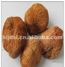 绥棱食用菌 猴头菇 猴头菇批发 野生猴头菇 量大从优 猴头蘑菇