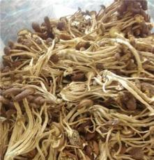 福建茶树菇图片