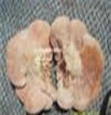 野生菌吃法 永腾榆耳 野生菌榆蘑