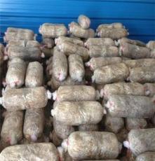 广州一级食用菌菌种,恒展农业科技为你服务