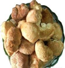 供應猴頭菇 新貨猴頭 猴頭 優質精選 初夏養胃 食用菌