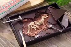 恐龍化石成交率高不高