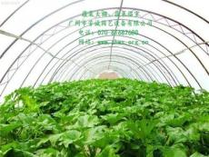 湖北蔬菜大棚温室.单栋蔬菜大棚温室.芳诚温室-广州市新的供应信息