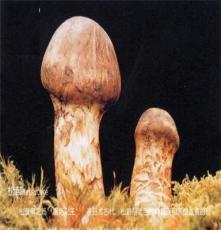 鮮松茸 學名松口蘑,別名大花菌、松茸、剝皮菌