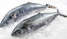 巴布亞新幾內亞馬鮫魚進口清關需要哪些手續