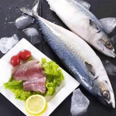 巴布亞新幾內亞馬鮫魚進口報關具體操作流程