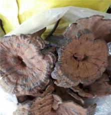野生香菇供應