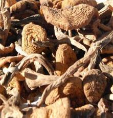 新貨!東北野生榛蘑 精選無根蘑菇 小雞燉蘑菇東北干貨 榛磨