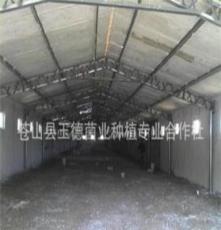 蒼山縣玉德菌業種植專業合作社供應:金針菇