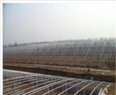 智能温室为绿色农业生产提供一条新的路径