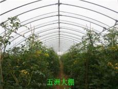 蔬菜大棚 養殖大棚建設 連棟大棚建造 五洲公司專業生產-安陽市新的供應信息