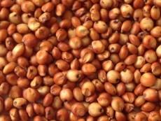 求购缅甸大米 木薯淀粉 玉米 高粱等