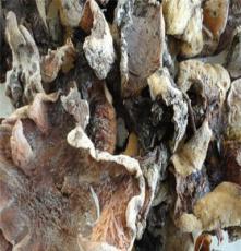 直銷榆耳 批發野生保健蘑菇榆耳 優質產品