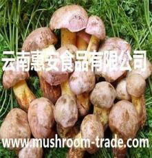 鮮牛肝菌(白蔥)