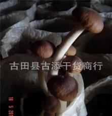 新品茶薪菇上市