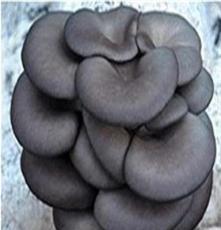 一级菌种、永腾菌种研究、平菇各级各类菌种