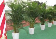 常州绿植租赁 植物租摆 花卉租赁 植物出租